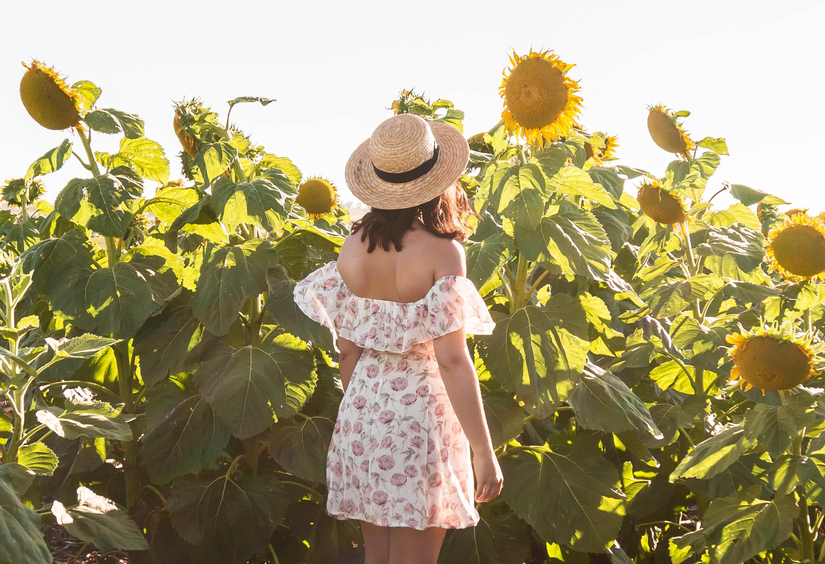 brooke-sunflower-fields-allora_header